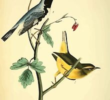 James Audubon Vector Rebuild - The Birds of America - From Drawings Made in the United States and Their Territories V 1-7 1840 - Black Throated Blue Wood Warbler by wetdryvac