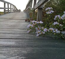 Boardwalk to the Atlantic, Plum Island Mass. by RonSparks