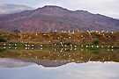 Gathering of Cattle Egrets - Reflected by RatManDude