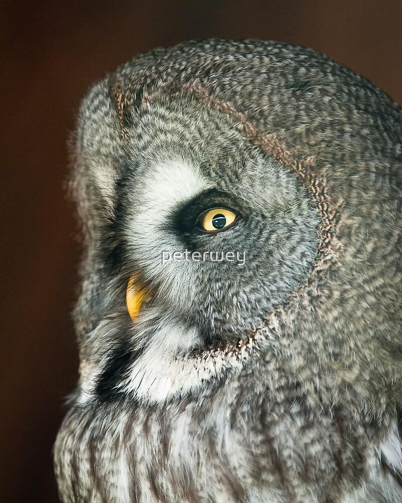 Great Grey Owl by peterwey