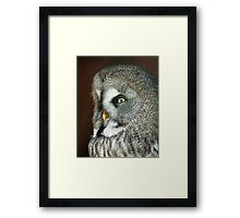 Great Grey Owl Framed Print