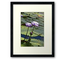 Lilac Clan Framed Print