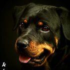 kia my dog by kimbo74