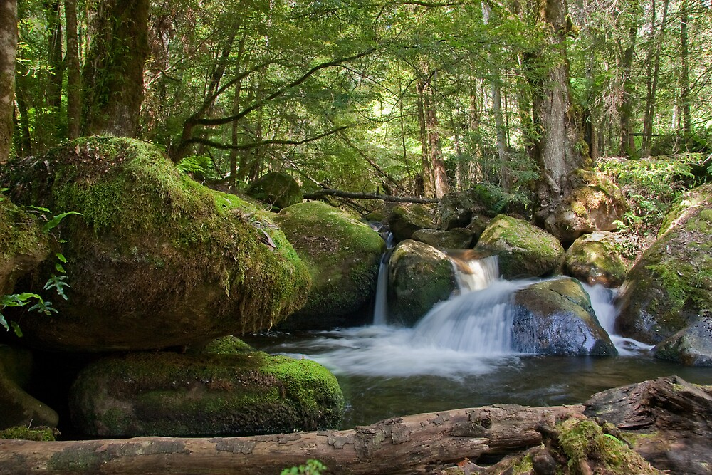 Falls Along The Beeches Trail - Near Marysville, Victoria, Australia by RustyL