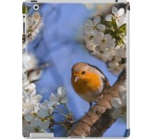 Robin in a sour cherry tree iPad Case/Skin