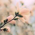 Pastel Petals by Jessica Jenney