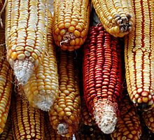 Drying Corn by Denitsa Dabizheva
