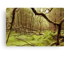 Glendalough Wood Canvas Print