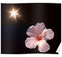 Sunburst o'er Hibiscus Poster