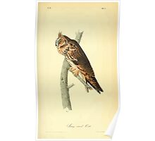 James Audubon Vector Rebuild - The Birds of America - From Drawings Made in the United States and Their Territories V 1-7 1840 - Long Eared Owl Poster