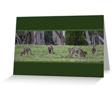 Eastern Grey Kangaroo, Macropus giganteus Greeting Card