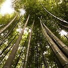 Bamboo Forest, Japan 2008 by Tash  Menon