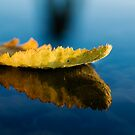 Leaf on water by Vegard Giskehaug