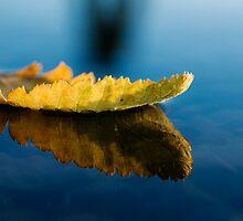 Leaf on water by Vegard Giskehaug