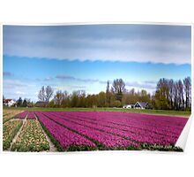 ...Tulip time in Holland : Spring.. Poster