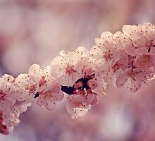 Soft side of Spring V by CarlaSophia
