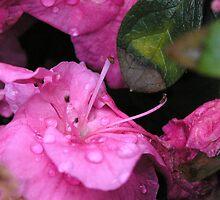 Purple Morning by G. Patrick Colvin