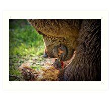Eurasian brown bear  Art Print