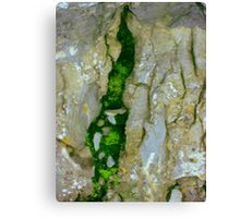 Mossy Crevice Canvas Print