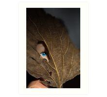Blue eyed nature girl Art Print