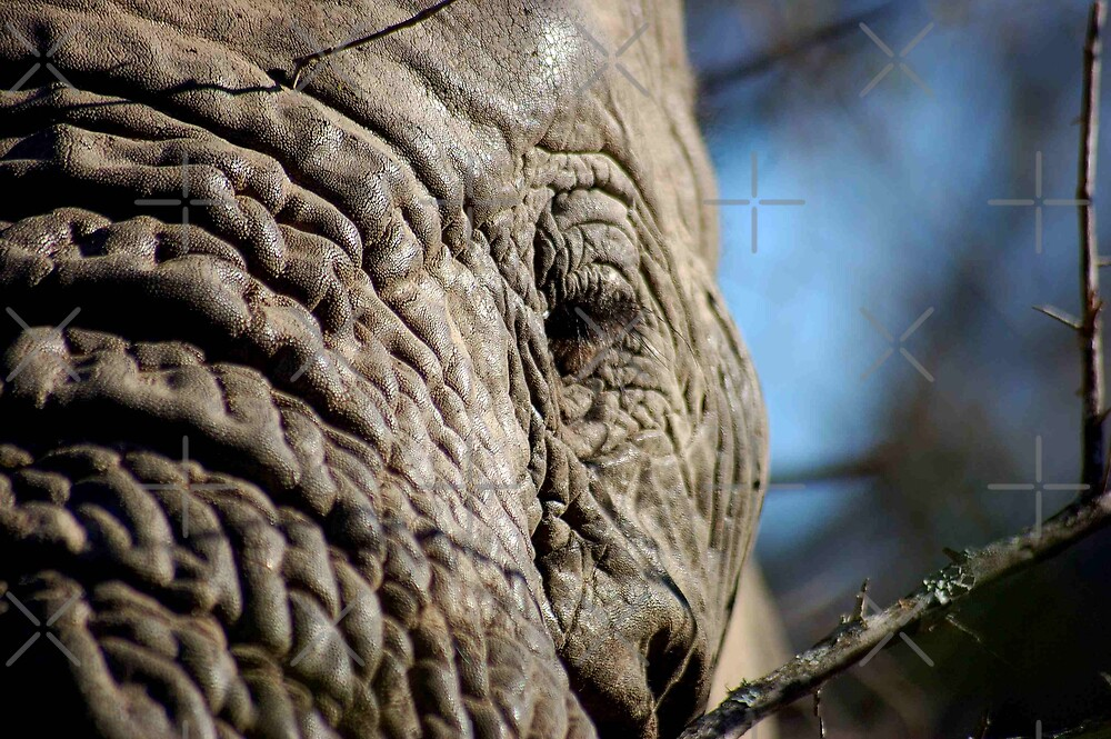 YEARS OF TATTERING by Magriet Meintjes