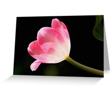 Pink Delight Greeting Card