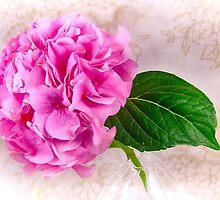 Vintage Pink Hydrangea  by daphsam