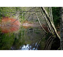 On San Juan Pond Photographic Print