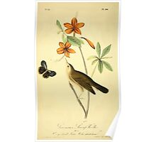 James Audubon Vector Rebuild - The Birds of America - From Drawings Made in the United States and Their Territories V 1-7 1840 - Swainson's Swamp Warbler Poster