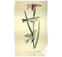 James Audubon Vector Rebuild - The Birds of America - From Drawings Made in the United States and Their Territories V 1-7 1840 - Blue Yellow Backed Wood Warbler Poster