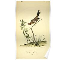 James Audubon Vector Rebuild - The Birds of America - From Drawings Made in the United States and Their Territories V 1-7 1840 - Lark Bunting Poster