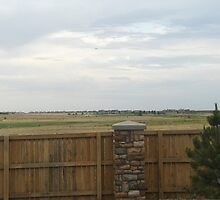Southern view from my front porch by janetmarston