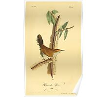 James Audubon Vector Rebuild - The Birds of America - From Drawings Made in the United States and Their Territories V 1-7 1840 - Bewicks Wren Poster