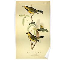 James Audubon Vector Rebuild - The Birds of America - From Drawings Made in the United States and Their Territories V 1-7 1840 - Bachman's Swamp Warbler Poster