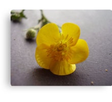 yellow waxy flower Canvas Print