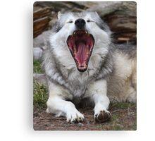 Wolf Yawning Canvas Print