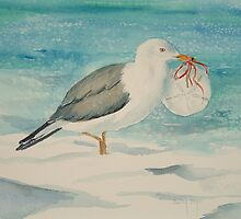 Gull with Sand Dollar by Autry  Dye