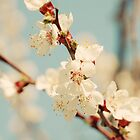Cherry Blossom by VikaRayu