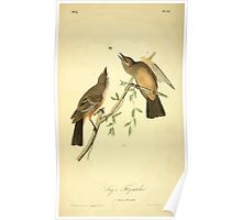 James Audubon Vector Rebuild - The Birds of America - From Drawings Made in the United States and Their Territories V 1-7 1840 - Says Flycatcher Poster