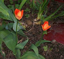 Spring Rebirth by WaleskaL