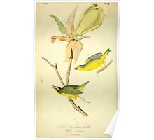 James Audubon Vector Rebuild - The Birds of America - From Drawings Made in the United States and Their Territories V 1-7 1840 - Kentucky Flycatching Warbler Poster