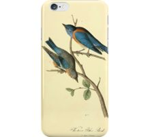 James Audubon Vector Rebuild - The Birds of America - From Drawings Made in the United States and Their Territories V 1-7 1840 - Western Blue Bird iPhone Case/Skin