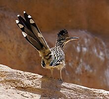 Roadrunner by Loree McComb
