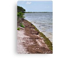 Canavarel National Seashore Canvas Print