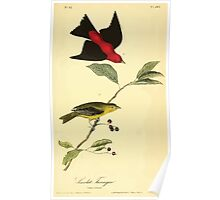 James Audubon Vector Rebuild - The Birds of America - From Drawings Made in the United States and Their Territories V 1-7 1840 - Scarlet Tanager Poster