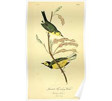 James Audubon Vector Rebuild - The Birds of America - From Drawings Made in the United States and Their Territories V 1-7 1840 - Hooded Flycatching Warbler Poster
