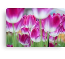 Spring Celebration. Tulips of Keukenhof Canvas Print