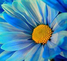 Blue Daisy by kellimays