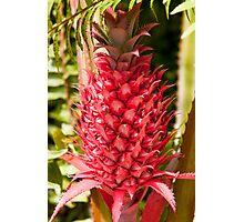Bromeliad, Everglades National Park, Florida Photographic Print
