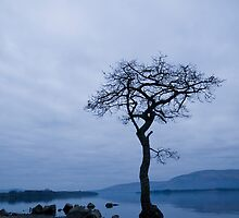 Lone tree by Empato Photography